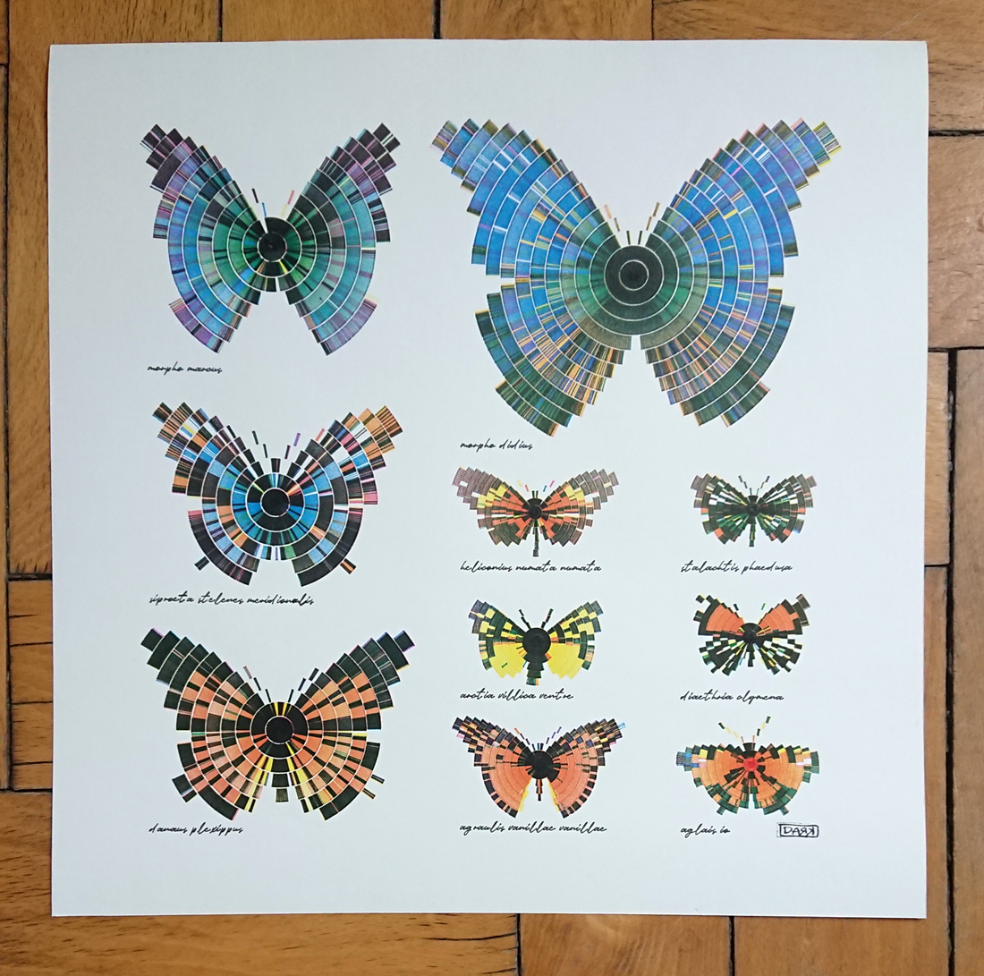 composition of butterflies in 1:1 scale